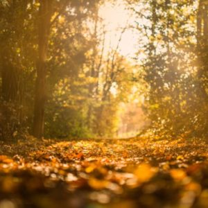 autumn-fall-forest-34001