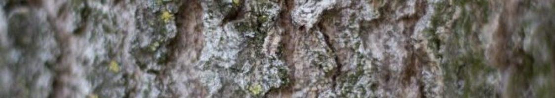 bark-forest-nature-89024