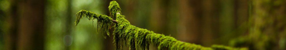 blur-branch-close-up-685366