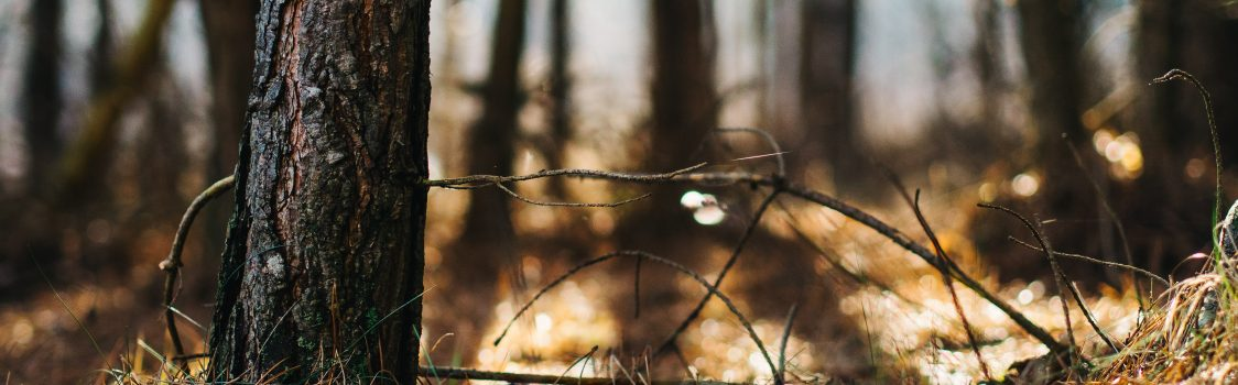 bokeh-forest-grass-8745
