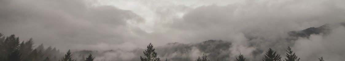 clouds-fog-forest-6718