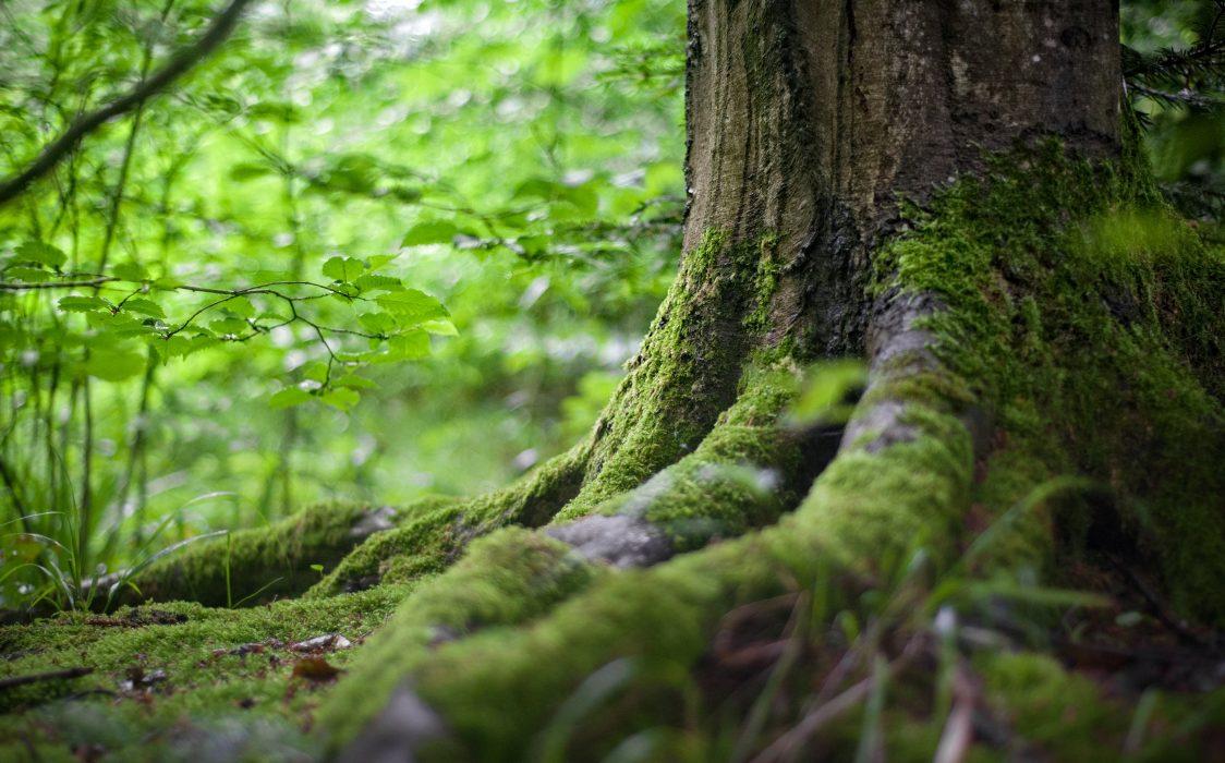 environment-forest-grass-142497
