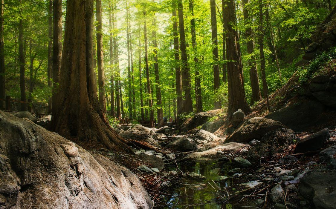environment-forest-idyllic-1068508