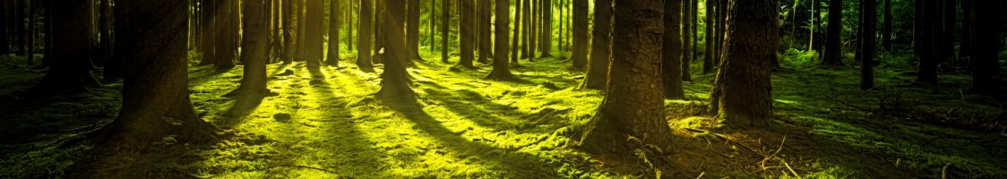 forest-grass-green-1125776