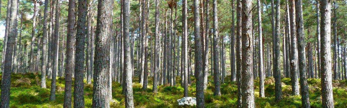 forest-grass-landscape-60062