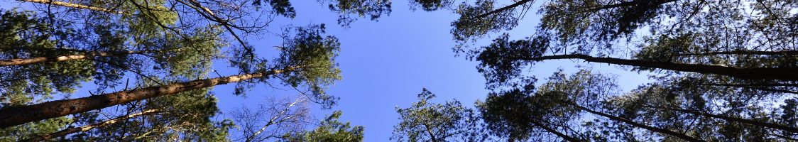 forest-low-angle-shot-nature-62301