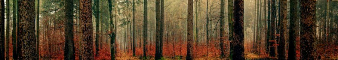 wood-3095720_1920
