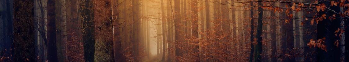 wood-3119826_1920