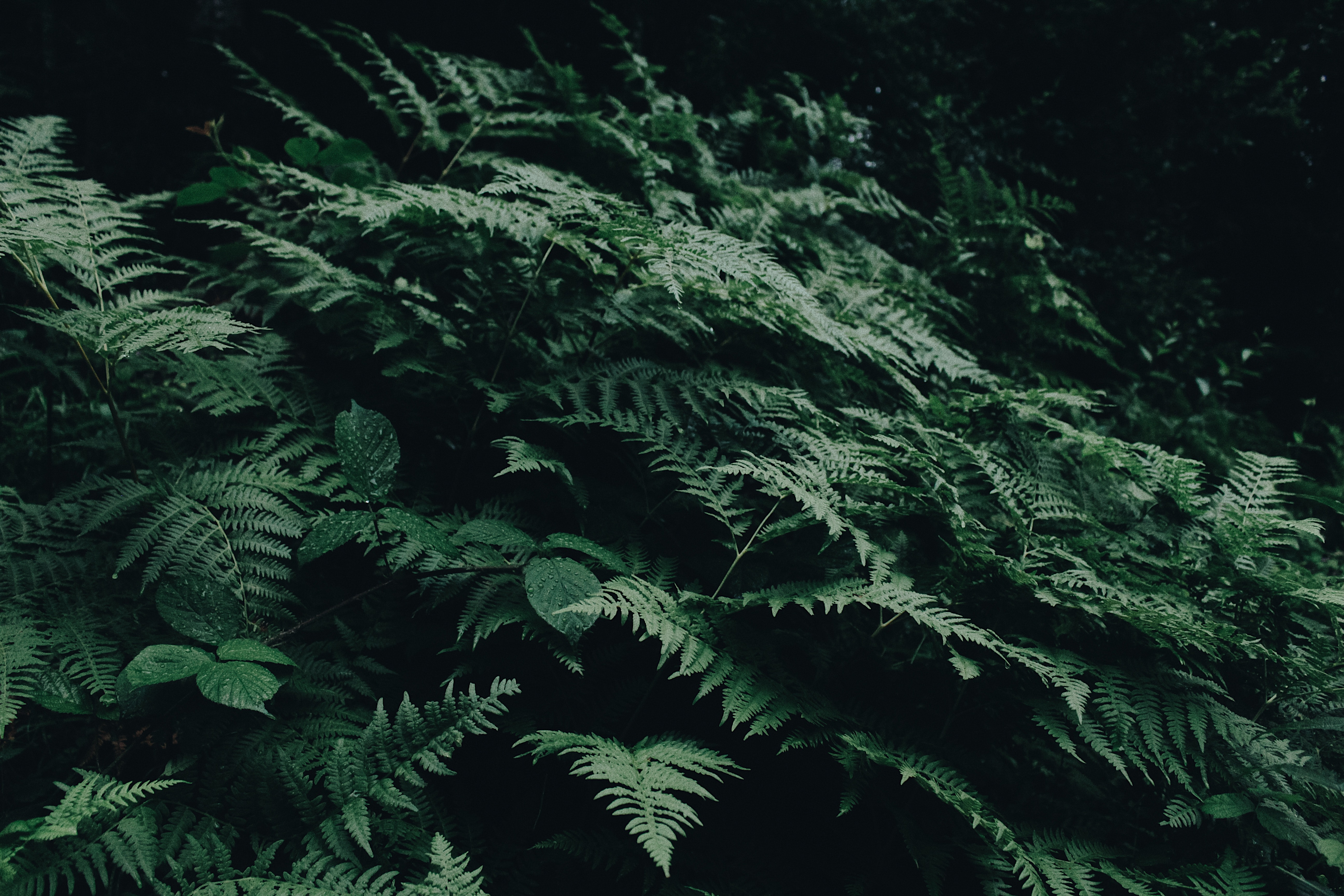abstract-conifer-day-1028223