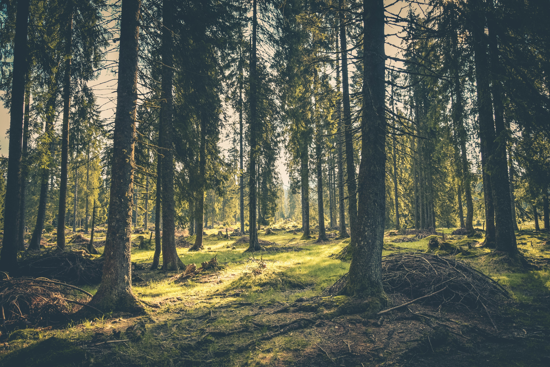 adventure-atmosphere-conifer-418831