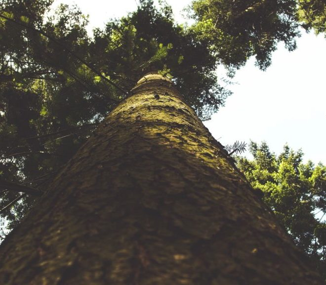 bark-forest-low-angle-shot-102285
