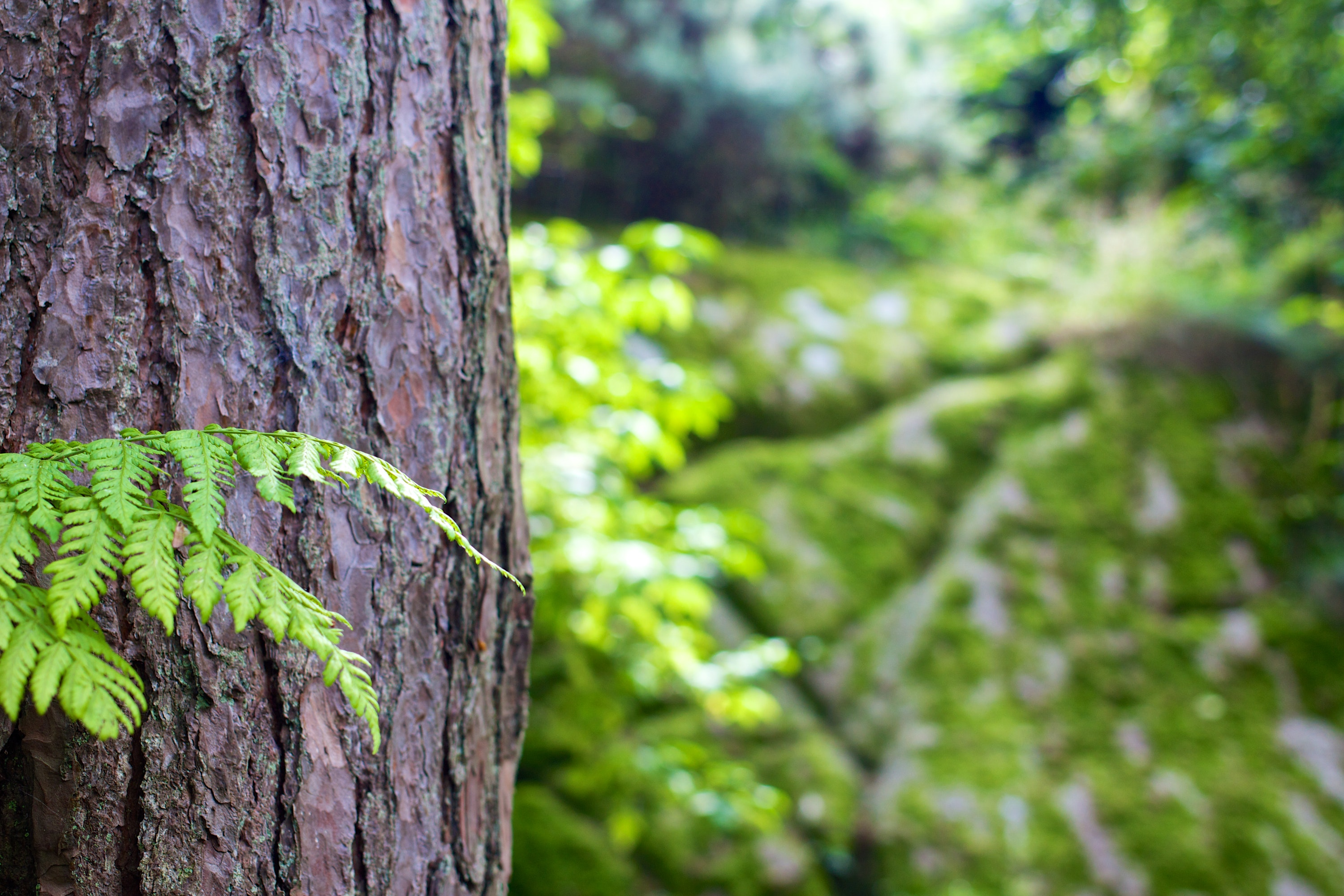 bark-forest-tree-4587