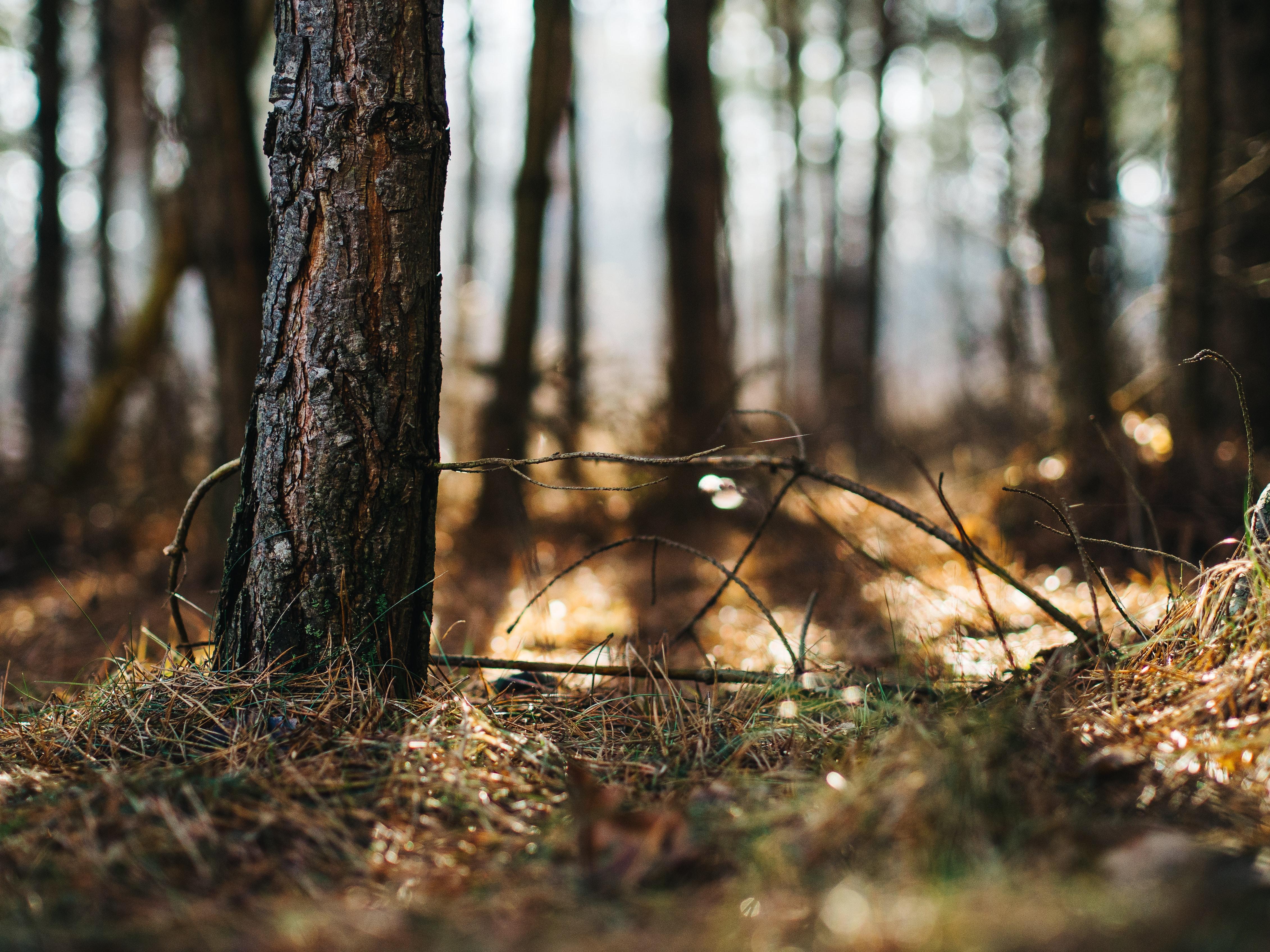 bokeh-forest-grass-8745