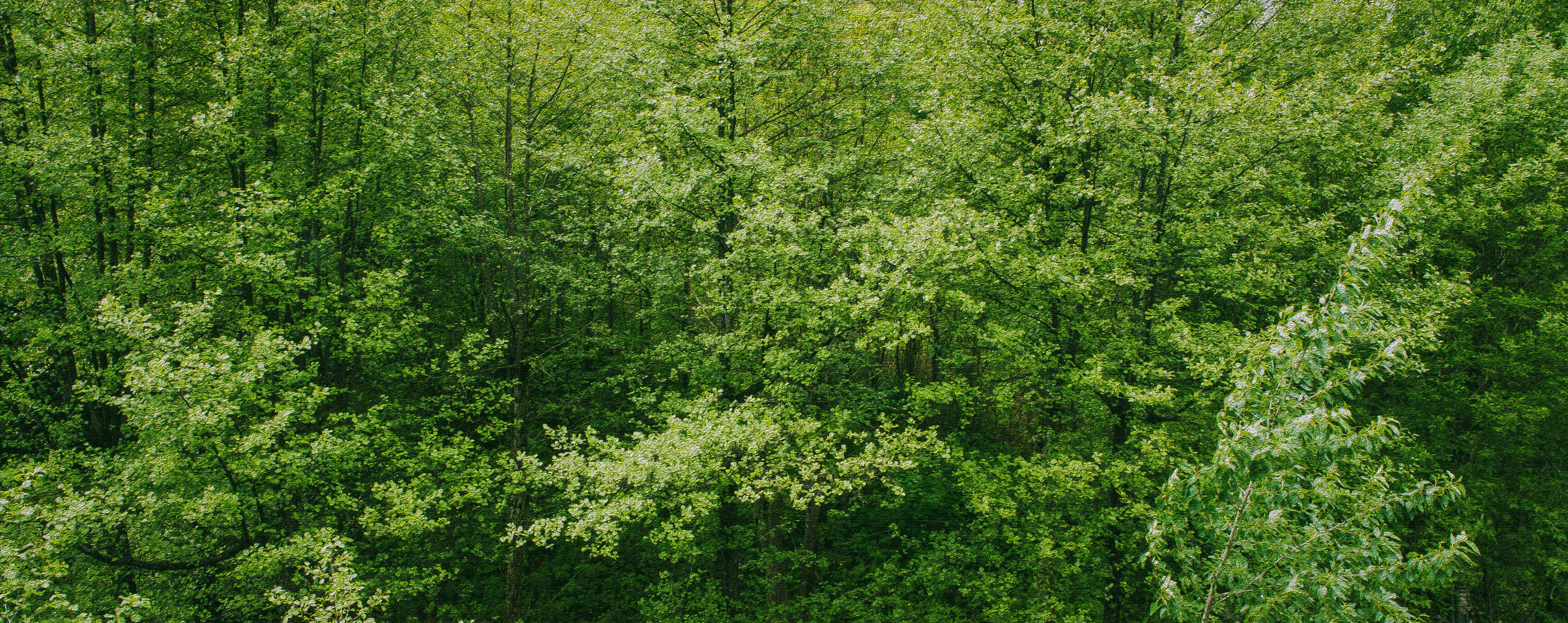 branches-daylight-environment-230978