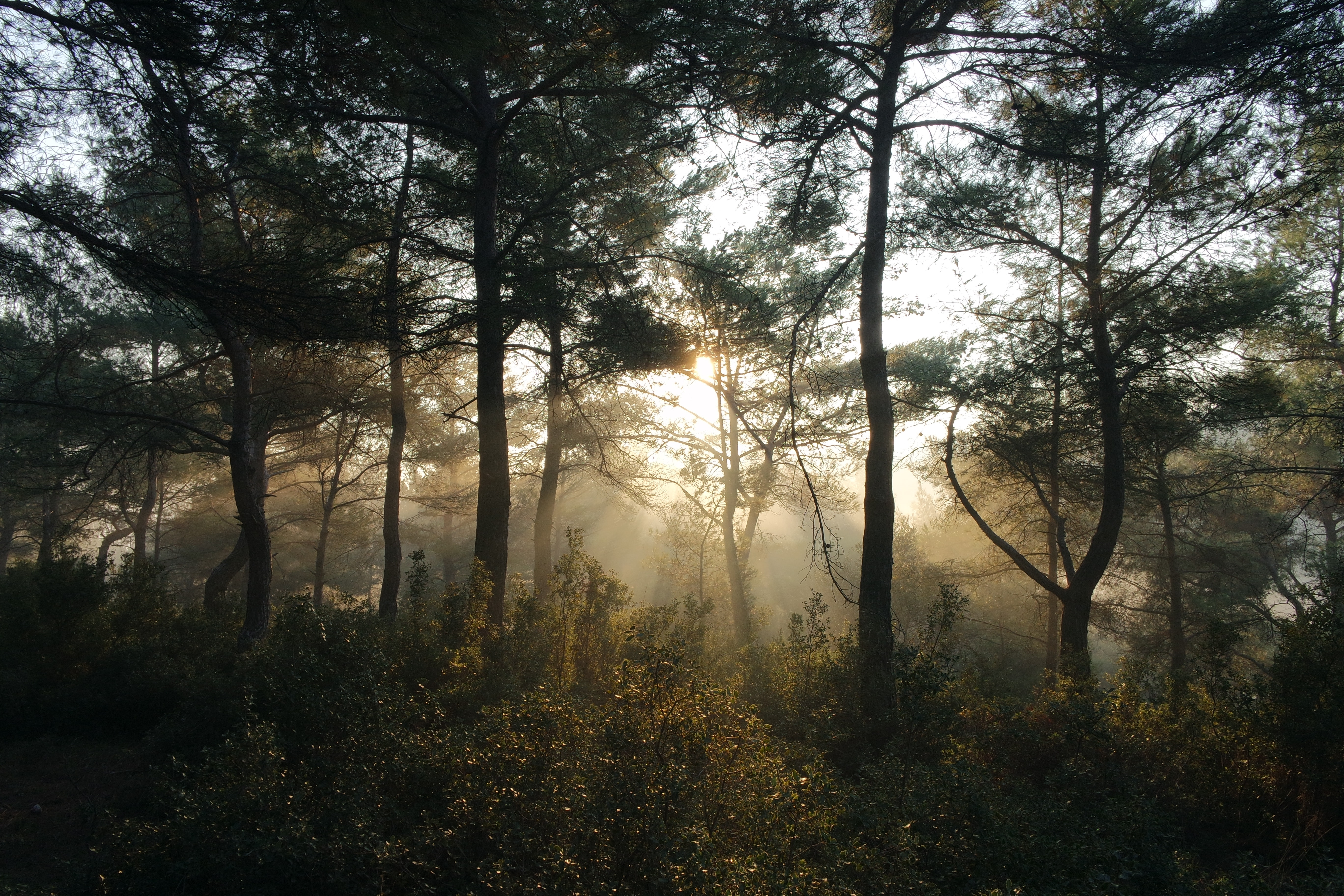 bushes-forest-nature-23547