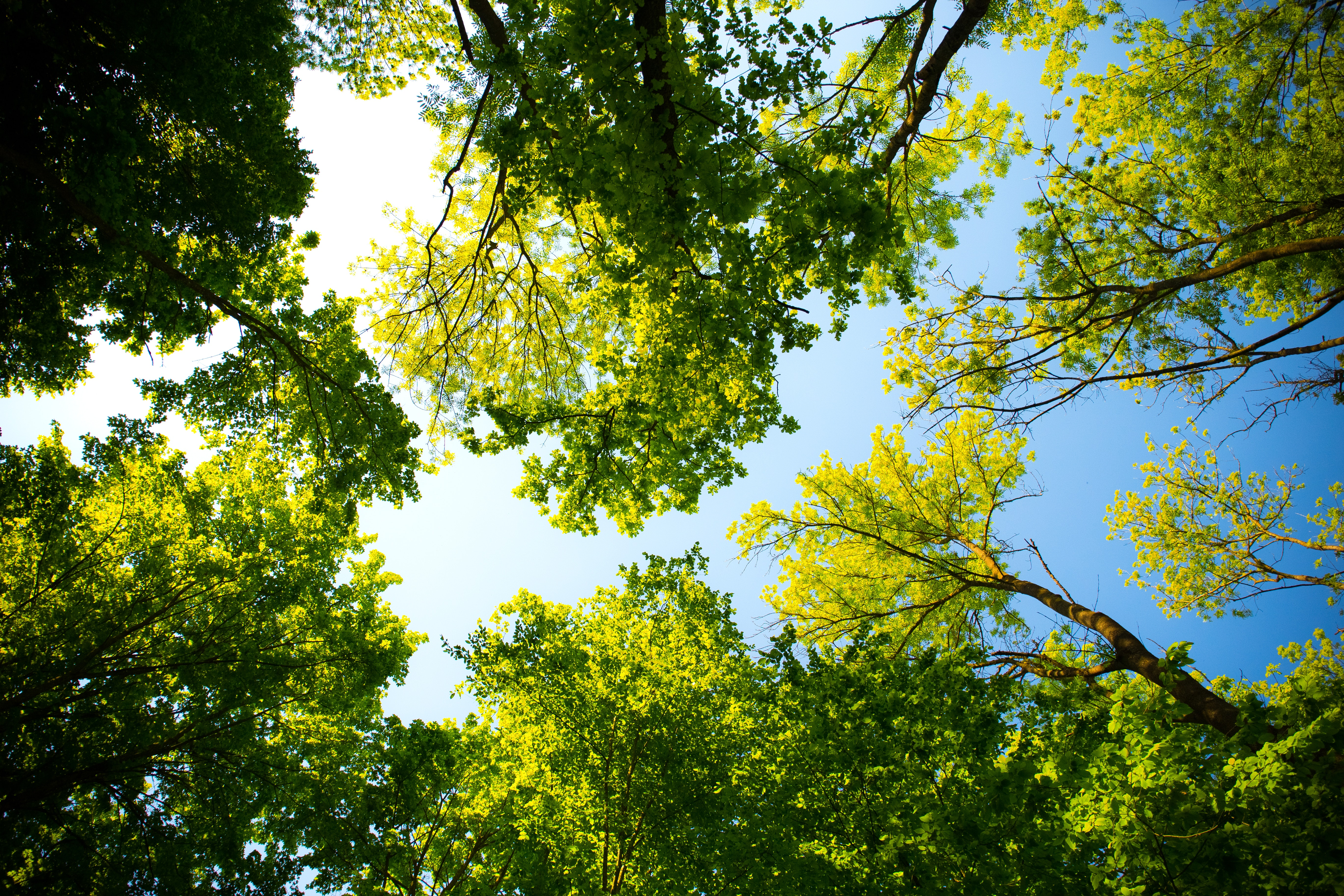 daylight-forest-nature-589802