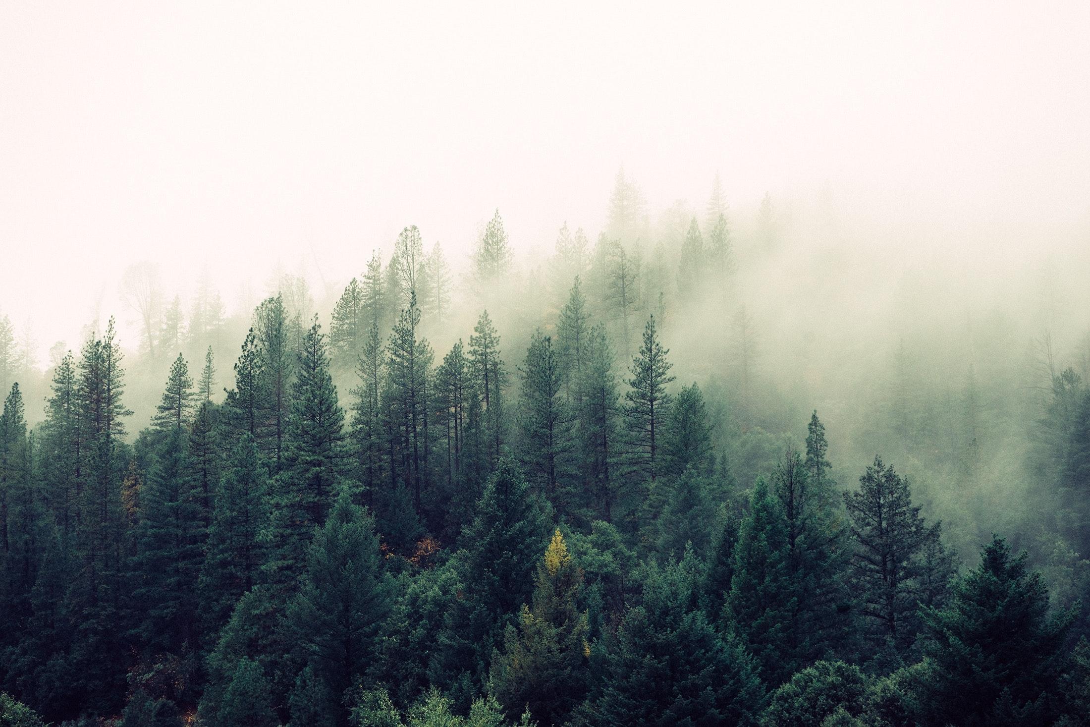 fog-foggy-forest-4827