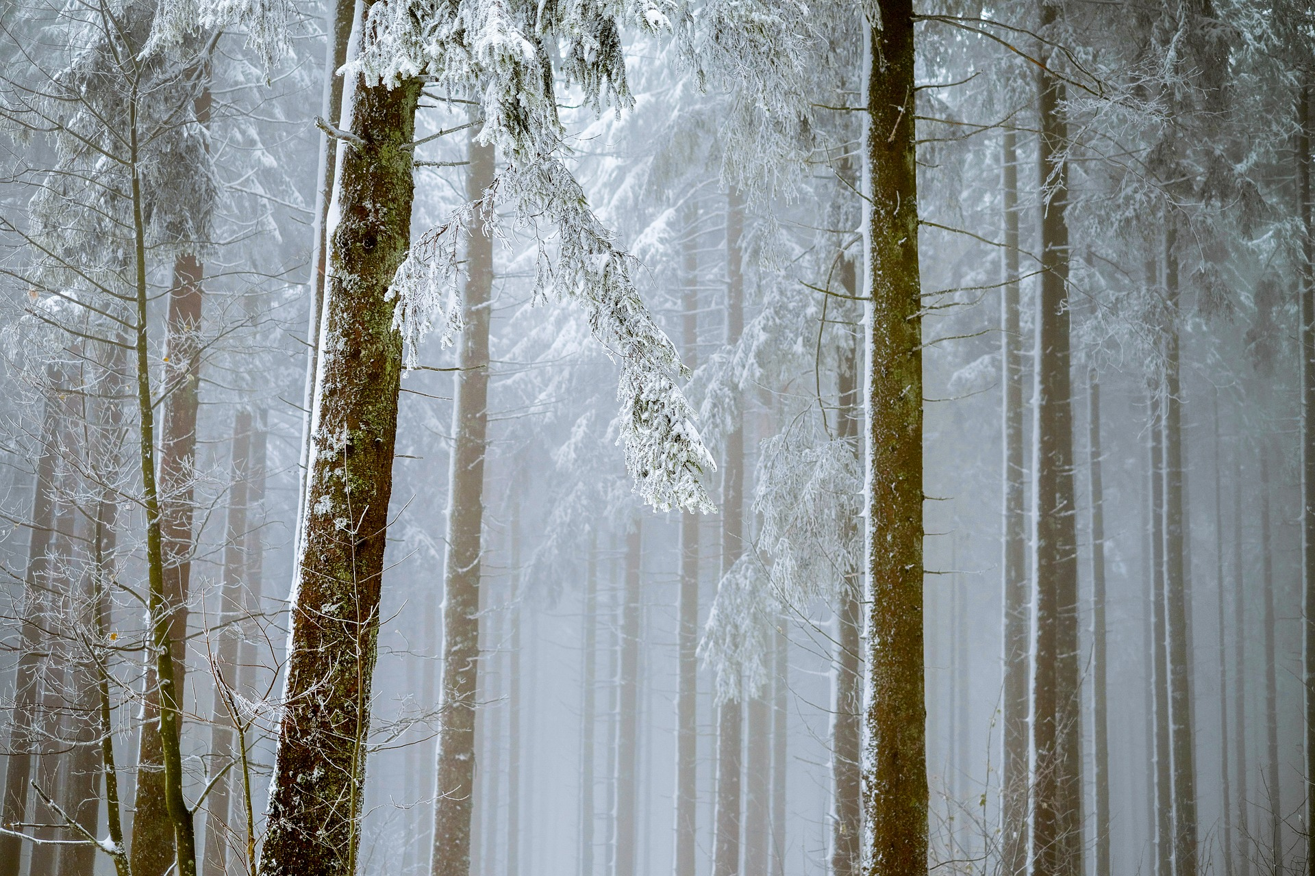 forest-2964073_1920